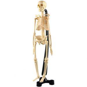 Mini Skeleton 46cm - Educational Toys Online