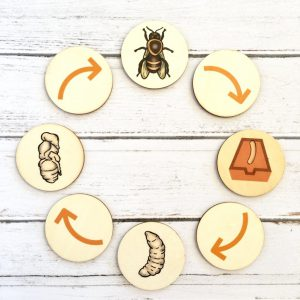Storytelling Toy Bee Life Cycle
